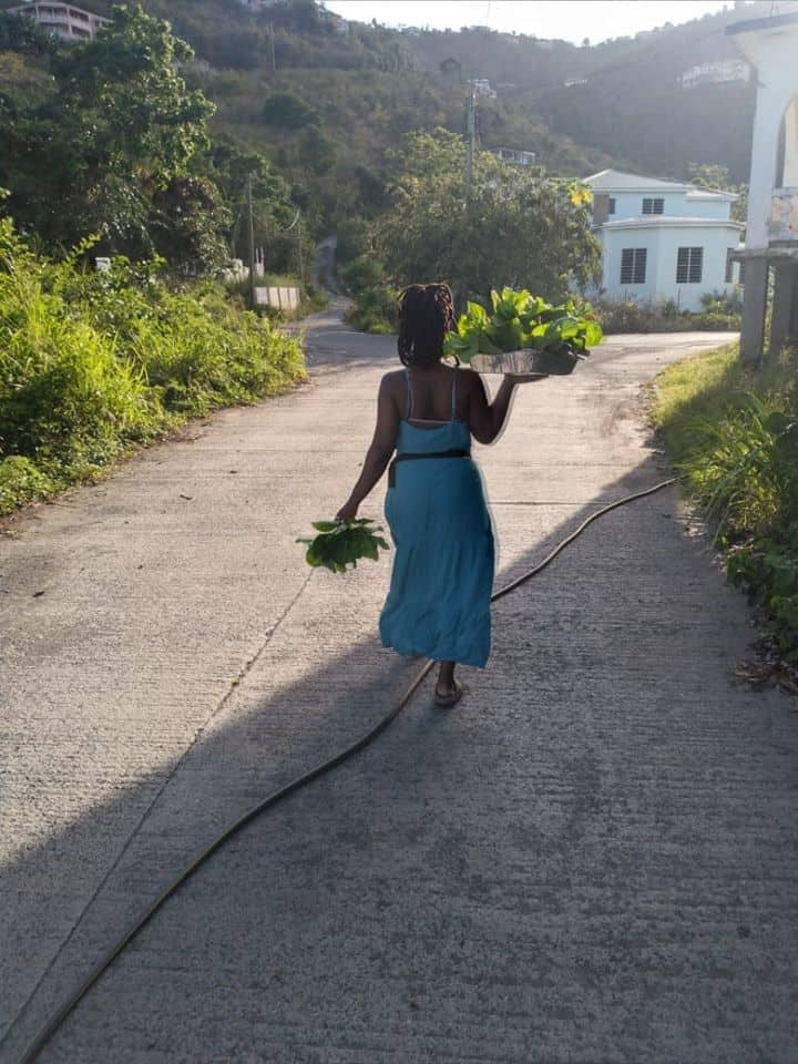 Farmer Fridays – Mill Round Farm BVI