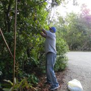 Red Mangrove Collection @ Bonnet House Museum