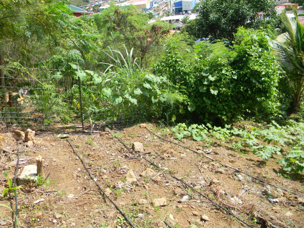 Garden Spotlight Drip Irrigation