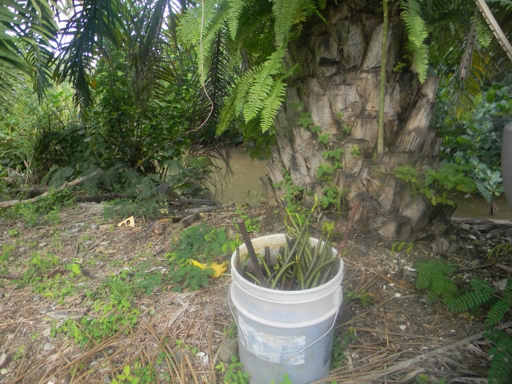 Mangrove habitat, Caribbean