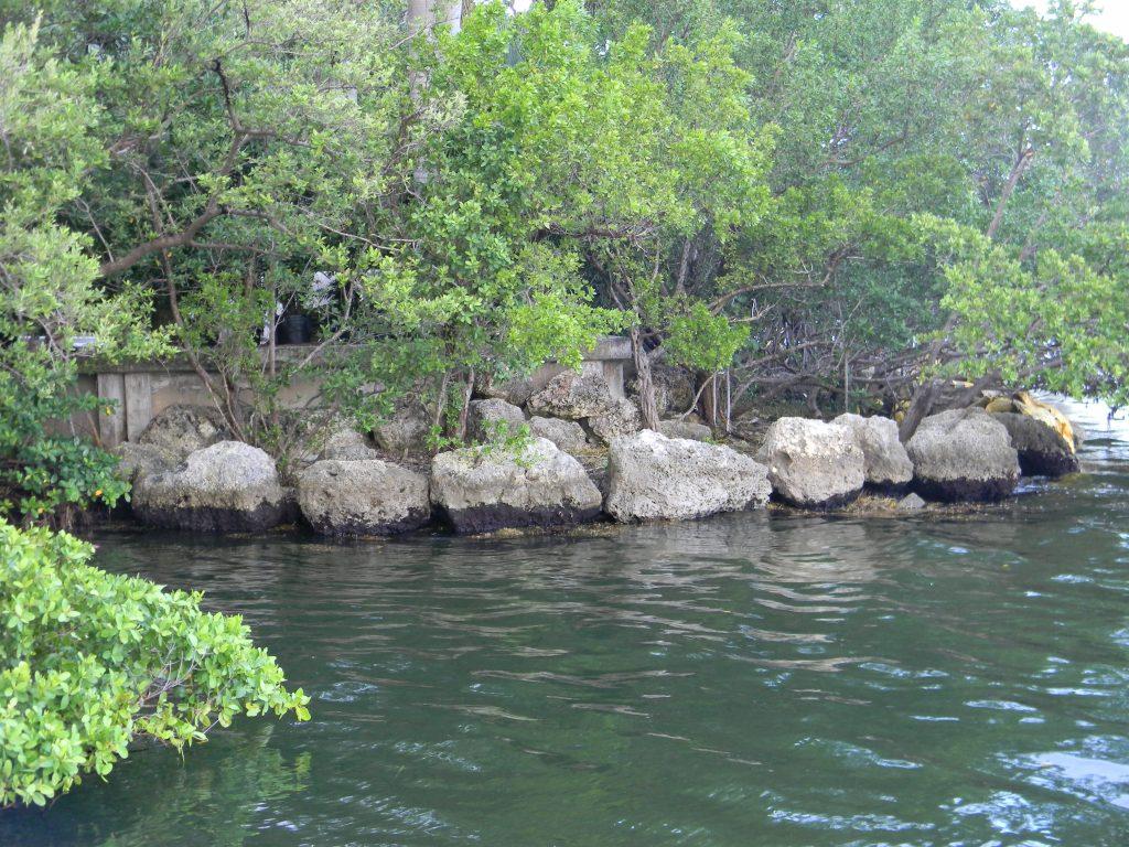 Mangroves at Vizcaya