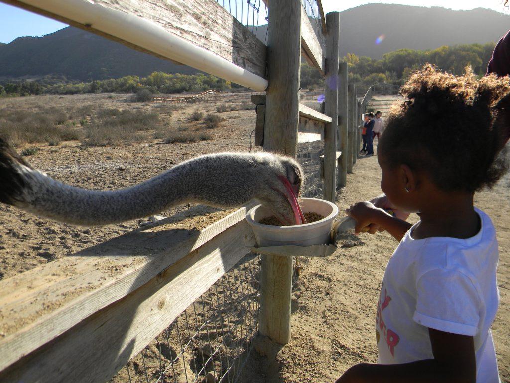 Child, Ostrich Land