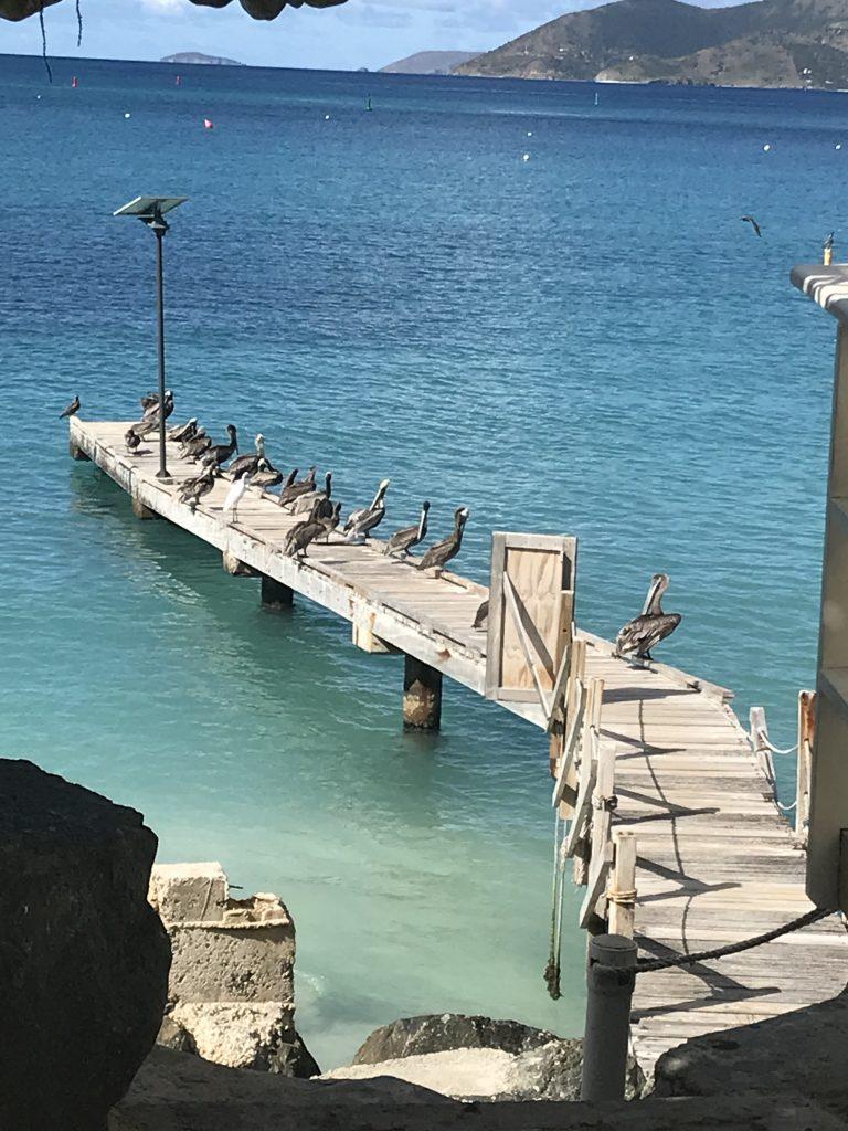 Shorebirds fishing