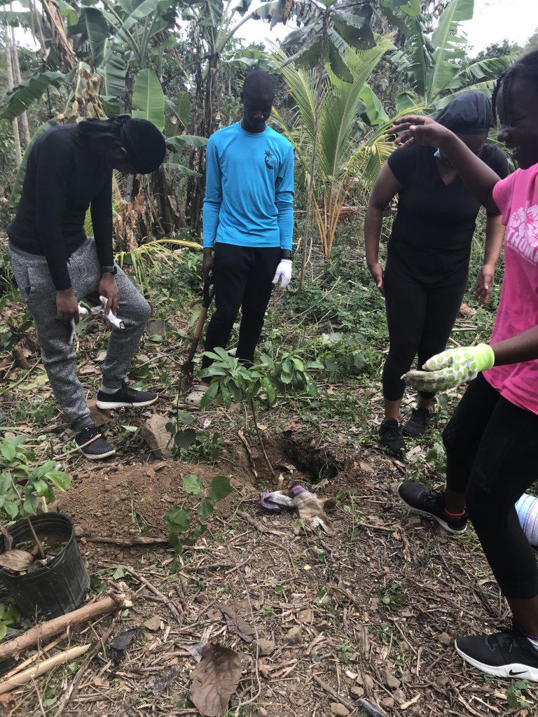 Planting Soursop