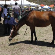 Agriculture Fair & Market Returns to Paraquita Bay!