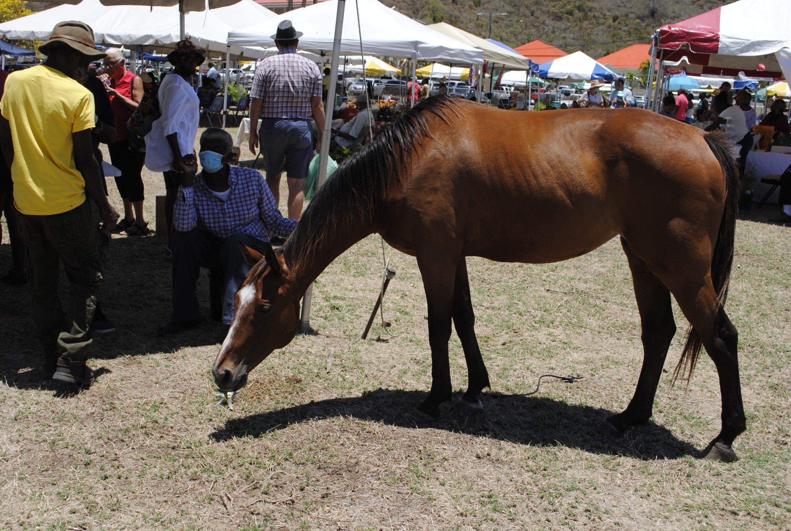 Agriculture Fair & Market Returns to Paraquita Bay!