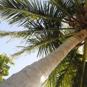 Summer Garden Series hits Sister Islands; Delays & No-Shows Happen!