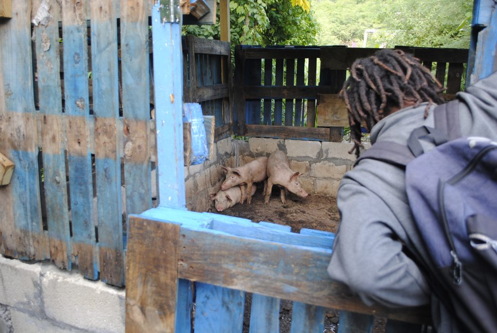 Callwood Pig Farm